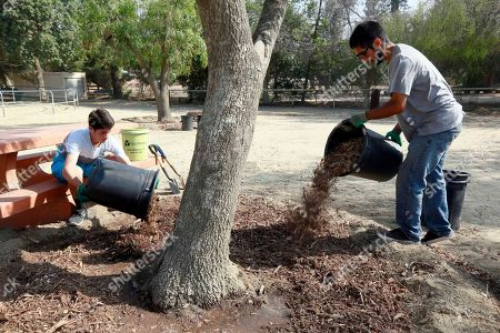 Josh Landau, Dante Osorio TreePeople volunteers Josh Landau, left, and Dante Osorio place mulch around a tree at the Los Angeles Equestrian Center Martinez Arena in Griffith Park in Los Angeles, . As Californians and the communities they live in cut back water usage and let lawns go golden, arborists and state officials are worrying about a potentially dangerous ripple effect. Nearby trees are going neglected and becoming diseased or dying