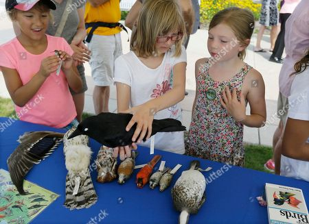 Stock Image of Isabelle Van Arragon, center, and her sister Charlotte Van Arragon, right, look over a bird exhibit set up by the Detroit Audubon Society at Gabriel Richard Park along the Detroit River in Detroit, . Officials opened an urban birding site featuring four wildlife spotting scopes and an interpretive panel identifying birds that can be seen in the area. The Detroit River region is at the intersection of the Atlantic and Mississippi flyways, making it prime for bird watching. More than 300 species of birds live in or regularly migrate through the area, including 30 species of waterfowl, 17 species of raptors, 31 species of shorebirds and 160 species of songbirds