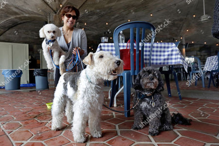 """Stock Photo of Michelle Vargas, Carmine, Lucy, Luigi Michelle Vargas, with, from left, 8-year-old Bichon Frise-Poodle mix """"Carmine,"""" 11-year-old Wire Haired Terrier """"Lucy,"""" and 10-year-old Shih Tzu-Poodle mix """"Luigi,"""" visit a cafe in a Manhattan park, on New York's Upper West Side. New York's pooches will be able to venture onto restaurant patios under a new state law that will allow restaurants to open their outdoor dining areas to canine companions. The measure was signed into law late by Gov. Andrew Cuomo"""
