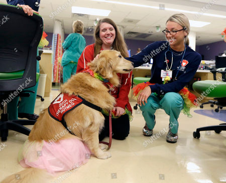 Registered nurse Caitlin Gruberg, right, and dog handler Katelynn Torres, left, pet Nutmeg, a therapy dog that helps patients reduce their anxiety, on Tutu Tuesday at Joe DiMaggio Children's Hospital in Hollywood, Fla
