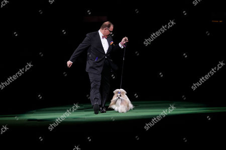 Luke Ehricht shows Rocket, a shih tzu co-owned Patty Hearst, during the best in show competition at the Westminster Kennel Club dog show, at Madison Square Garden in New York