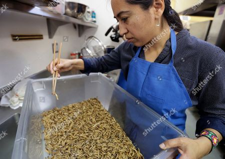 """Monica Martinez Monica Martinez sorts meal worms prior to baking them, in San Francisco. A growing number of """"entopreneurs"""" are trying to persuade consumers that insects are the next super food, a nutritious, low-cost, environmentally friendly source of protein that can help feed a hungry world. But they face a tough job convincing Westerners that crickets, meal worms and caterpillars can be tasty treats"""