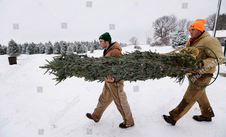 Howell Tree Farm employees Avery Langholz, left, and Chris Allen carry a Christmas tree to load ontp a customer's car, in Cumming, Iowa. A Christmas tree likely will cost a little more this year, and growers say it's about time. Six years of decreased demand and low prices put many growers out of business and those who hung on are just relieved they survived