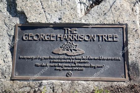A plaque marks the place where a tree was planted in Los Angeles to honor former Beatle George Harrison in Griffith Park on . The tree planted in Los Angeles to honor former Beatle George Harrison has been killed by beetles. The pine grew to more than 12 feet tall before succumbing to a bark beetle infestation and removed last month