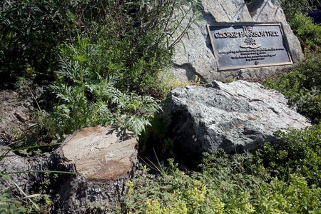 A plaque marks the place where a tree was planted in Los Angeles to honor former Beatle George Harrison in Griffith Park on . The tree planted to honor former Beatle George Harrison has been killed by beetles. The pine grew to more than 12 feet tall before succumbing to a bark beetle infestation and removed last month