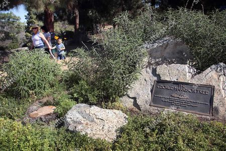 Visitors walk past a plaque marking the George Harrison Tree, in Griffith Park on . The tree planted in Los Angeles to honor former Beatle George Harrison has been killed by beetles. The pine grew to more than 12 feet tall before succumbing to a bark beetle infestation and removed last month