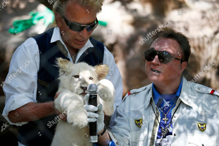 Siegfried Fischbacher, left, holds up a white lion cub as Roy Horn holds up a microphone during an event to welcome three white lion cubs to Siegfried & Roy's Secret Garden and Dolphin Habitat, in Las Vegas. The three white lion cubs, born in South Africa, are scheduled to be available for public viewing Friday
