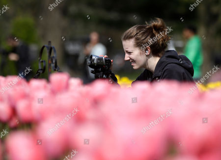 Kelly Raymond Kelly Raymond, a student at the New School of Radio and Television, records tulips in Washington Park, in Albany, N.Y. The city celebrates its annual tulip festival this weekend