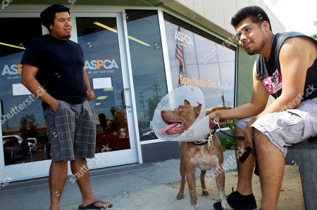 """Christian Molina, Ivan Molina Dog owner, Christian Molina, right, and his brother, Ivan Molina, with their pit bull, """"Hercules,"""" register their dog at the Chesterfield Square shelter in South Los Angeles. The Molina brothers had previously surrendered """"Hercules"""" to the animal shelter for lack of resources to neuter him, after neighbors complained about its behavior. The American Society for the Prevention of Cruelty to Animals has started rolling out one of its most ambitious projects to date, a $25 million push to save tens of thousands of dogs and cats that would be killed in shelters or on the streets of Los Angeles County"""
