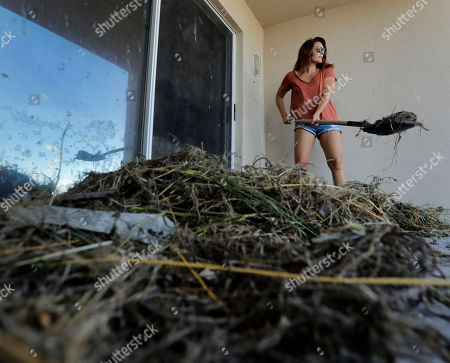 Stock Picture of Danielle Henry clears debris from outside her condo at Jacksonville Beach, Fla. after Hurricane Matthew passed through Friday. A fast-weakening Hurricane Matthew continued its march along the Atlantic coast Saturday, lashing two of the South's most historic cities and some of its most popular resort islands, flattening trees, swamping streets and knocking out power to hundreds of thousands
