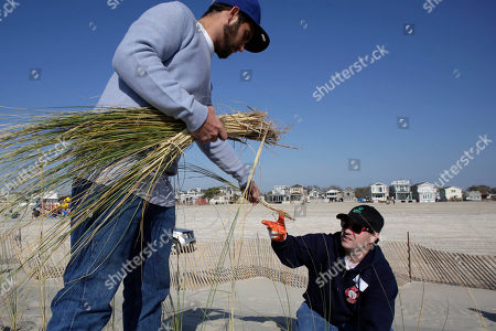 Kevin Owens, Dan O'Donoghue Kevin Owens, left, and Dan O'Donoghue plant beach grass on a newly constructed sand dune along the beach in the Breezy Point neighborhood in the Queens borough of New York, . A year ago Superstorm Sandy ravaged the region. The beach grass will protect the new dune, 1200 feet in length, from erosion