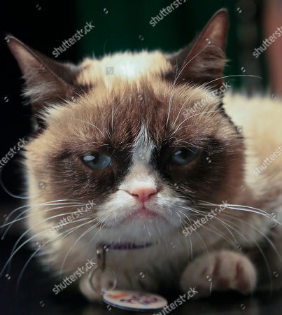 Grumpy Cat Grumpy Cat, an Internet celebrity cat whose real name is Tardar Sauce, is photographed on in New York. Known for her facial expression, her owner Tabatha Bundesen says that Grumpy Cat's permanently grumpy-looking face is due to feline dwarfism