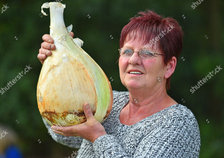 Stock Picture of For Features Harrogate Autumn Flower Show At The Great Yorkshire Showground Harrogate North Yorkshire.  Heaviest Onion Winner Barbara Cook From Knottingly West Yorkshire With Her Prize Winning Onion Weighing 6.165kgs.  18/9/15.