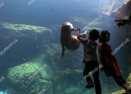 Stock Photo of Joseph Han, Mary Han Joseph Han, 5, and sister, Mary Han, from San Jose, Calif., explore the 211,000 gallon Seal and Sea Lion Habitat at the Aquarium of the Pacific in Long Beach, Calif