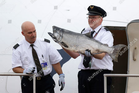Jeff Meyer, Peter Michels Alaska Airlines first officer Peter Michels carries a 40-pound Copper River salmon off the plane as Capt. Jeff Meyer looks on as the first shipment of the valuable fish arrives in Seattle from Cordova, Alaska, . The arrival of the salmon, which is prized for it's taste and color, is a rite of spring in Seattle, and the fish bring top dollar in restaurants and fish markets