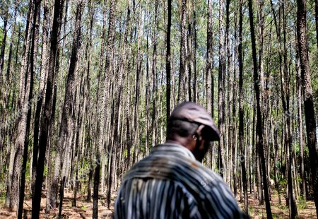 """Stephen Wilson In this May 15, 2013 photo, Stephen Wilson, 68, walks through the forest on his property where his home that his father built stands in the Hog Hammock community of Sapelo Island, Ga. on . """"Dad built this house with his labor. Every time I put the key in the door coming home as a child, I remember saying, 'Hi, papa. Hi, mama.' It has a lot of remembrance"""