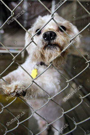 One of three dogs taken from the home of Ariel Castro peers out from its cage at the city kennel in Cleveland . The dogs will be in foster care until kidnap victims Amanda Berry, Gina DeJesus and Michelle Knight decide if they want to take the pets into their homes