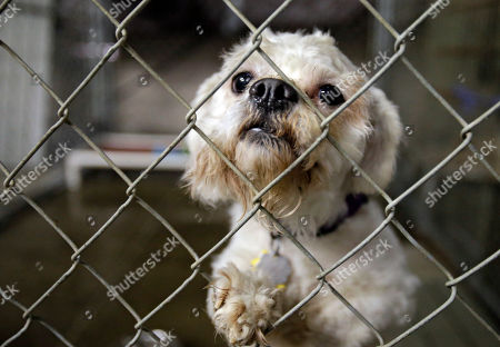 One of three dogs taken from the home of Ariel Castro peers out from its cage at the city kennel in Cleveland, . The dogs will be in foster care until kidnap victims Amanda Berry, Gina DeJesus and Michelle Knight decide if they want to take the pets into their homes