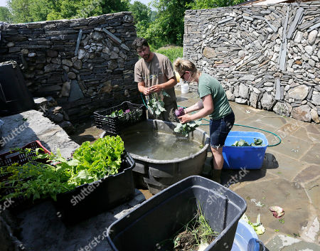 Dan McManus, Tess Parker Community supported agriculture farmers Dan McManus, left, and Tess Parker wash kohlrabi at Common Hands Farm, in Claverack, N.Y. Produce is sold at the farm and in the Brooklyn borough of New York