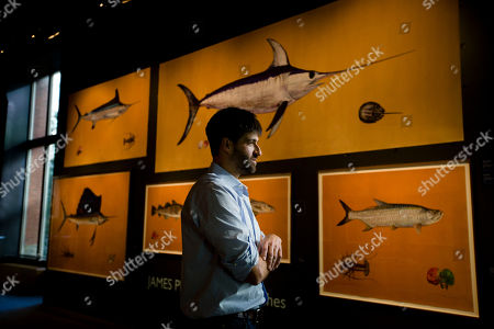"""Stock Image of Connecticut artist James Prosek speaks about his paintings of saltwater fish during an interview with the Associated Press at the Academy of Natural Sciences of Drexel University in Philadelphia. His work has been compared to the famous 19th century naturalist and painter John James Audubon, whose """"Birds of America"""" prints are still treasured for their beauty and accuracy. The James Prosek: Ocean Fishes exhibit at the academy is scheduled to open Oct. 13 and run through Jan. 21"""