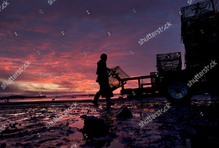 Norman Haynes Lobsterman Norman Haynes loads traps onto a trailer at sunrise in Falmouth, Maine. State lobster biologist Carl Wilson said the state's 2014 lobster season is off to a slow start, due to the cold winter and spring that likely held back molting. Lobster season typically picks up after the bulk of the population sheds its shells and grows to legal harvesting size. In 2013 that occurred in late June. But it hasn't yet happened this year, meaning smaller catches