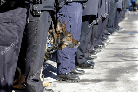 Patricia Parete Police officers line at attention along with Herc, k-9 dog, as pallbearers carry the casket of former Buffalo Police Officer Patricia Parete during funeral services in Buffalo, N.Y., . Parete, was shot and paralyzed while on duty six years ago. She died last Saturday at her Niagara County home. Parete and another Buffalo police officer were shot in December 2006 after responding to a fight at a convenience store. One of the bullets hit Parete in the chin and lodged in her spine. The other officer also survived. The man who shot them, Varner Harris Jr., is serving 30 years to life in a state prison
