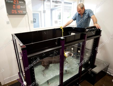 Andrew Rosenthal, owner of LA Dog Works watches Trixie, 3, a pit bull, using an aquatic treadmill meant for dogs in need of lower impact exercise, during a demonstration at LA Dog Works in Los Angeles. The aquatic treadmill is one of three different types at LA Dog Works. LA Dog Works, a 24-hour dog care center, which includes boarding, grooming, training, daycare, hydrotherapy, massage therapy and a retail store, also uses a $3,000 Jog A Dog and a $40,000 underwater treadmill from a company that is now Hudson Aquatic Systems