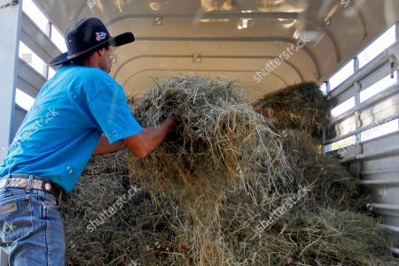 Stock Image of Travis McCoy Travis McCoy, of Atoka, Okla., adds some loose hay to the back of a truck in Oklahoma City, . Teamsters Local Union 135 in Indianapolis, Ind., the Ohio Conference of Teamsters and Kansas City's Joint Council 56 all donated their time and tractors to help pick up freshly-harvested hay from northern states and bring it to Oklahoma.The Teamsters participation is part of a project that Farm Aid, Inc., is championing to bring food to cattle owned by Oklahoma farmers
