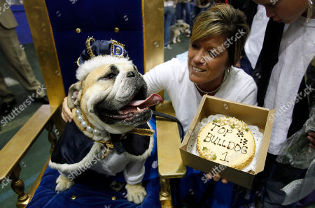 Nancy Brown, of Johnston, Iowa, pets her bulldog Lucy Brown after it was crowned the winner of the 32nd annual Drake Relays Beautiful Bulldog Contest, in Des Moines, Iowa. The pageant kicks off the Drake Relays festivities at Drake University where a bulldog is the mascot