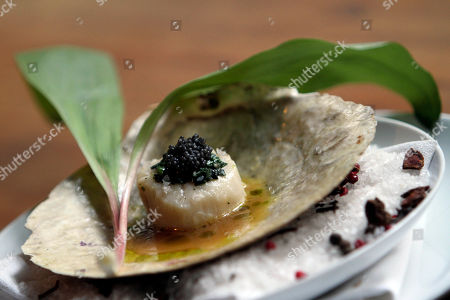 """This photo shows a still attached diver sea scallop with ramp-roe vinaigrette and American caviar at Restaurant Marc Forgione in New York. Though chef Marc Forgione may be among the most ardent of the ramp's proponents _ particularly in the wildly inventive ways he cooks it _ this chef/restaurateur, who has twice won a Michelin star for his Tribeca eatery and once won """"The Next Iron Chef,"""" is far from alone"""
