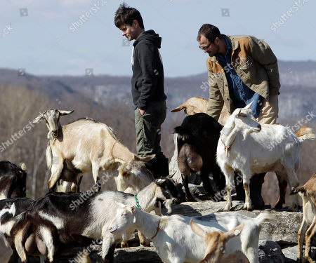 Brent Ridge, Josh Kilmer Purcell Dr. Brent Ridge, left, and Josh Kilmer-Purcell, of Planet Green's The Fabulous Beekman Boys, visit with goats at their Beekman Farm in Sharon Springs, N.Y., on