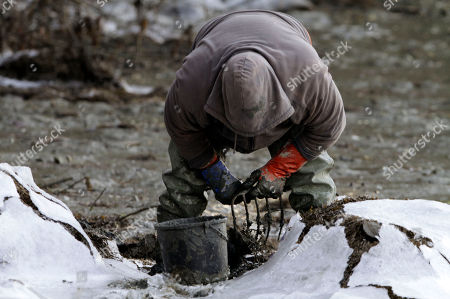 Tim Davis Clammer Tim Davis, of West Bath, uses a rake to uncover soft shell clams along the frozen mudflats of Back Cove in West Bath, Maine, on . Davis said his work is normally challenging yet poses a whole other level of determination during the frigid Maine winter months