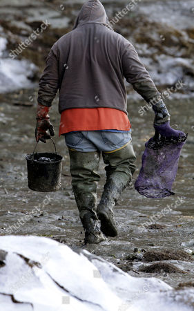 Tim Davis Clammer Tim Davis, of West Bath, walks to another spot to rake soft shell clams from the frozen mudflats along Back Cove in West Bath, Maine, on . Davis said his work is normally challenging and poses a whole other level of determination during the frigid Maine winter months