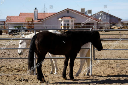 "Roberta Walker In a photo, Horses are seen in a corral outside the home of Roberta Walker in Hinkley, Calif., in the Mojave Desert northeast of Los Angeles. A California state study has not revealed elevated cancer levels in the town, a small community whose struggles with contaminated groundwater inspired the award-winning Hollywood movie ""Erin Brockovich."" Earlier this year, Walker and other residents learned that the pollution, which Pacific Gas & Electric was required to clean up, was once again moving and had seeped into their groundwater. Now, Brockovich has returned to the town that made her famous and is once again rallying residents"