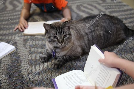 Stock Photo of Browser the cat sits among a group of children being read to in the city's public library Thursday, June 30, 2016, in White Settlement, Texas. The governing council of the Fort Worth suburb of White Settlement voted 2-1 to give the library 30 days to find a new home for Browser. Ex-council member Alan Price said Browser's supporters will petition for a reprieve in November's elections.