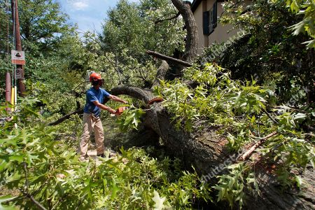 Michael Cotter Michael Cotter, a private contractor working for the District of Columbia, cuts down a fallen tree fallen from Sunday's storm, in northwest Washington