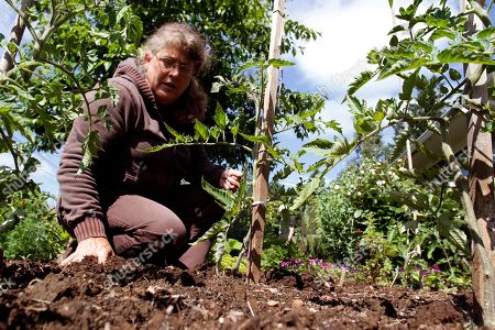 Donna Smith works in a residential front yard vegetable and flower garden she helped create in Portland, Ore. Getting the most from your garden is the subject of an Associated Press, Smart Spending Gardening column running