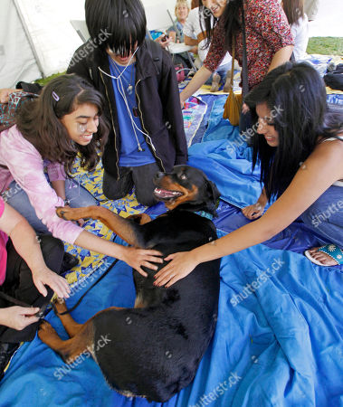 """Stock Image of Vanessa Gonzalez, David Ha, Leticia Magana From left, Vanessa Gonzalez, David Ha and Leticia Magana stroke Rumor, a 2-year-old Rottweiler, at a """"Pet a Therapy Fluffy to De-Stress Before Finals"""" promotion under a tent at the University of California-Riverside, in Riverside, Calif., . Service and therapy dogs from the Delta Society, Loma Linda University Medical Center and other organizations were brought to school so students, who might not be able to have dogs on campus, could pet the animals before finals. Rumor's primary job is as a service dog, who can sense low blood sugar in diabetic patients"""