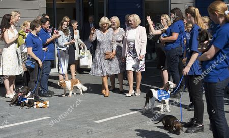 Editorial image of Camilla Duchess of Cornwall visits Battersea Dogs and Cats Home, London, UK - 07 Sep 2016
