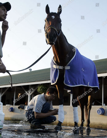 Private Vow, David Hernandez, Pedro Trujillo Kentucky Derby hopeful Private Vow is held by David Hernandez, left, while groom Pedro Trujillo wraps his legs, at Churchill Downs in Louisville, Ky