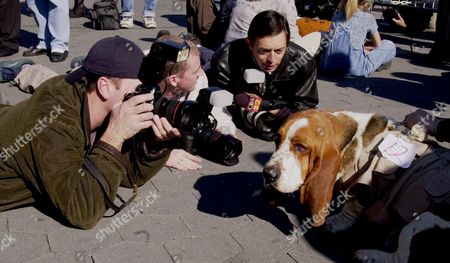 "GUS Photographers surround Gus, a basset hound which won a Walter Matthau look-a-like contest, at Universal Studios Hollywood in Universal City area near Los Angeles. Hundreds of dogs and cats auditioned for a roles as celebrity look-a-likes during the opening ceremonies of a new attraction, ""Animal Planet Live"" which debuts in April"