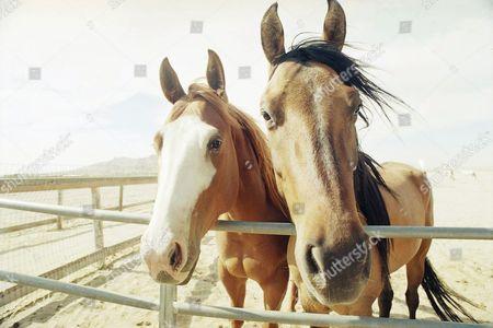 Editorial photo of Equus Sanctuary, USA