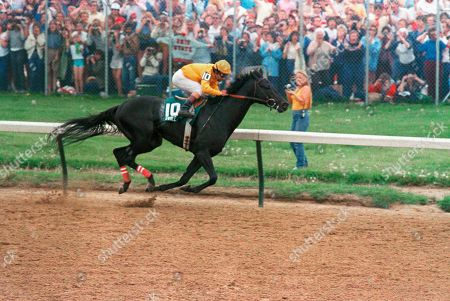 Swale charges down the stretch on his way derby, in Louisville. Swale was trained by Woody Stephens and ridden by Laffit Pincay, Jr