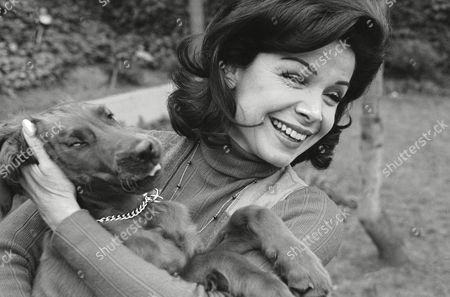 """Former Mouseketeer Annette Funicello gets an enthusiastic greeting from Skippy, her Irish setter puppy, at home in Encino, Calif., . Annette is now 34, married to Jack Gilardi, her agent, and is mother of three children. Today, she says, """"I'm doing exactly what I want to do"""" - making guest TV appearances and commercials, which leaves her plenty of free time to spend with her children and husband"""