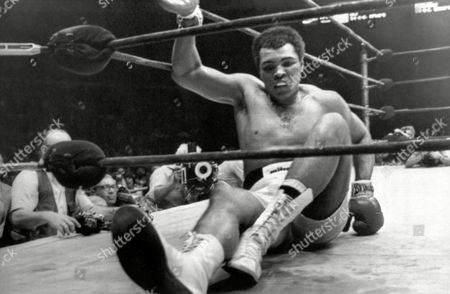 Image shows American boxer Muhammad Ali during the 14th round of the Heavyweight Title fight between him and American boxer Earnie Shavers at Madison Square Garden