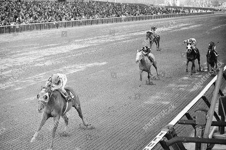 Stock Picture of Jockey Ron Turcotte pilots Secretariat (leading, #4) over the finish line at Aqueduct in New York, to win the $27,750 Bay Shore stakes in his debut as a three-year-old. The 1972 Horse of the Year, got under the wire 4½ lengths ahead of Champagne Charlie, with Michael Venezia up, second from left, with a time of 1:23 1/5. Venezia's mount was two and a half lengths ahead of Impecunious, right, ridden by James Moseley