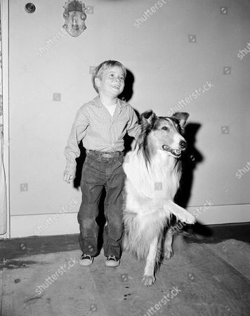 """Jon Provost Seven-year-old Jon Provost, who will join television's """"Lassie"""" show in the fall, gets acquainted with the famed four-footed actor on the Hollywood set, Los Angeles on . The two became close friends immediately. Jon will play the leading juvenile role of Timmy on the show. The blue-eyed, blonde-haired lad is well known as a performer. He made his screen debut at the ripe old age of two in """"So Big."""" He has just completed his tenth movie role"""