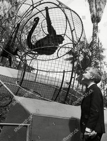 Jon Provost The antics of a pair of monkeys entertain young TV actor Jon Provost during his visit to the zoo in San Diego, California on