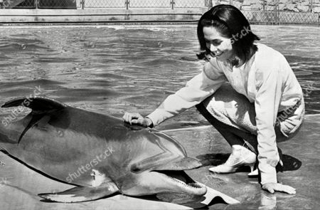 """Nancy Kwan gets acquainted with a friendly porpoise called """"Smiley"""" at Marineland in Hollywood, California on . Kwan was there to film scenes for her film """"Fate is the Hunter"""