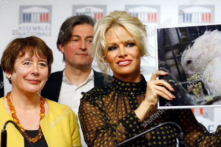 Stock Photo of Pamela Anderson, actress and animals rights defender, right, flanked with French Deputy Laurence Abeille, left, displays photos during a news conference at the French National Assembly to protest the force-feeding of geese used in the production of foie gras, in Paris, France